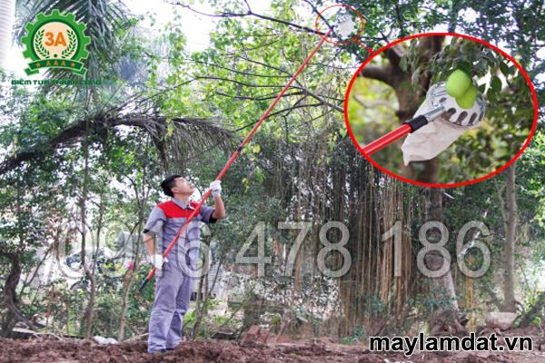 ktv sử dụng dụng cụ hái trái cây 3A3M