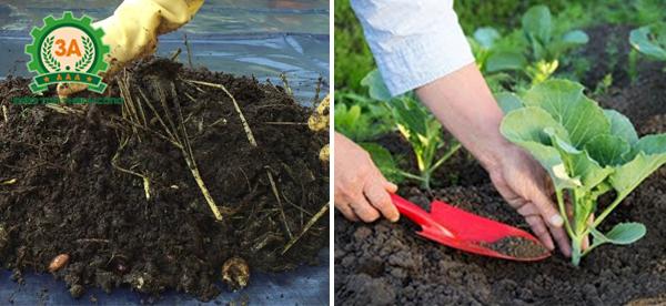 cách làm phân hữu cơ từ thức ăn thừa: sử dụng phân bón cho cây trồng